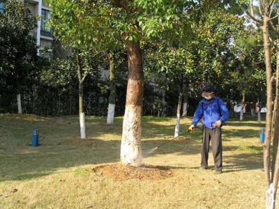 园林白蚁防治