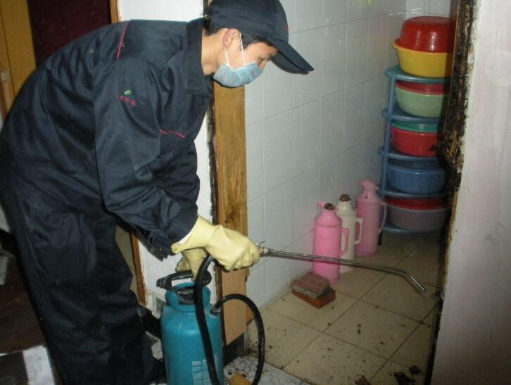 重庆白蚁防治教您新房装修怎么预防白蚁